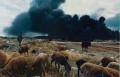 "o. T. (Baku, Aserbaidschan), Serie ""Soviet Pollution"", 1993, Farbfotografie, 47 x 61 cm"
