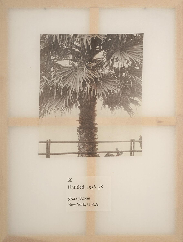 Jenö Gindl, Untitled #66, 2018, Kallitypie auf Japanpapier auf Keilrahmen, 120 x 90 cm, aus der Serie: Americans
